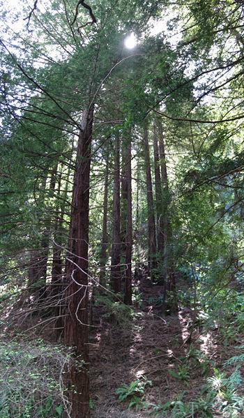 RedwoodRegional