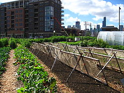 250px-New_crops-Chicago_urban_farm