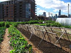 250px-New_crops-Chicago_urban_farm